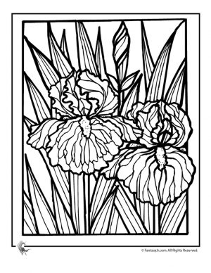detailed flower coloring pages for adults printable – 7dg31