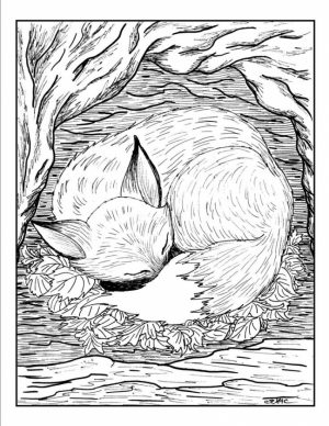 Fox Coloring Pages for Adults   sad3x