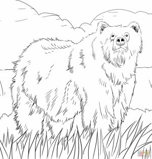 Free Coloring Pages of Bear   a5t31