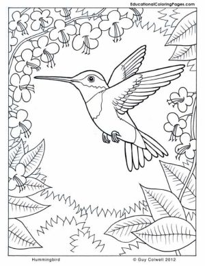 Free Hummingbird Coloring Pages to Print   33958