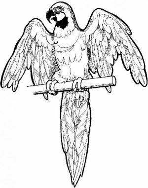 Free Parrot Coloring Pages to Print   12490