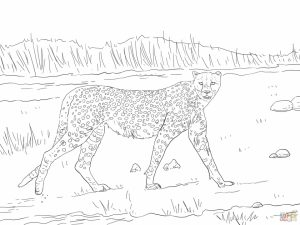 Free Printable Cheetah Coloring Pages   at2n5