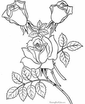 Free Roses Coloring Pages for Adults   92377