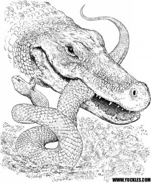 Free Simple Alligator Coloring Pages for Children   af8vj