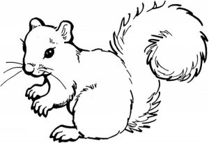 Free Squirrel Coloring Pages for Kids   yy6l0