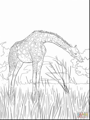 Giraffe Coloring Pages Hard Printables for Older Kids   41852