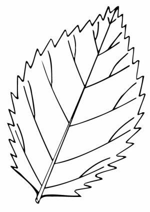 Leaf Coloring Pages Printable   6cv60