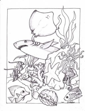 Ocean Animals Coloring Pages   urb48