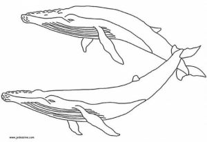Online Whale Coloring Pages   61800