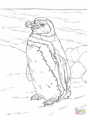 Penguin Coloring Pages for Adults Free to Print   29804