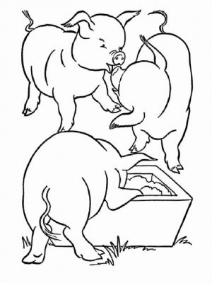 Pig Coloring Pages for Kids   36759