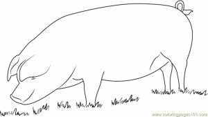 Pig Coloring Pages for Kids   37759
