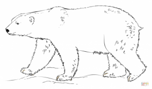 Polar Bear Coloring Pages Printable for Kids   r1n7l