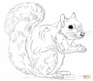 Preschool Squirrel Coloring Pages to Print   nob6i