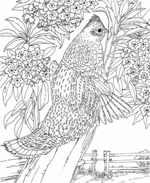Printable Difficult Animals Coloring Pages for Adults   OI73