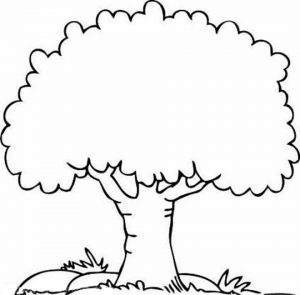 Printable Tree Coloring Pages for Kids   BV21Z