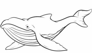 Printable Whale Coloring Pages   41558