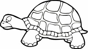 Printables for Toddlers   Turtle Coloring Pages Online Free   m7pzl