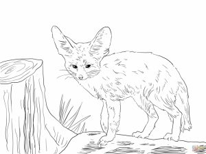 Realistic Fox coloring pages free   pler5