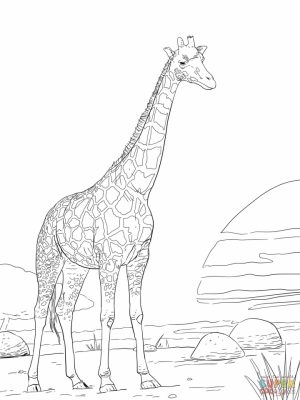 Realistic Giraffe Coloring Pages for Adults   74916