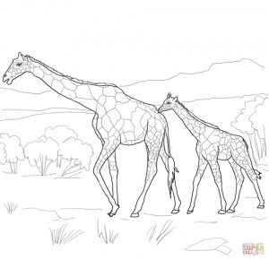 Realistic Giraffe Coloring Pages for Adults   94710