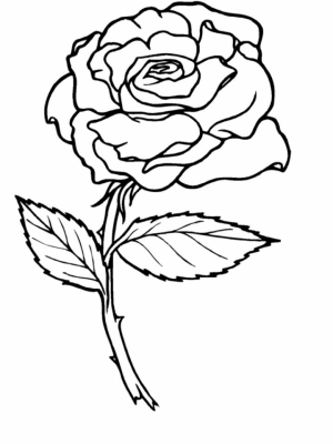 Roses Coloring Pages for Adults Free Printable   9548