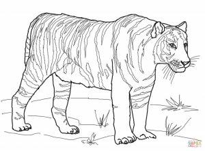 Tiger Coloring Pages for Adults   90412