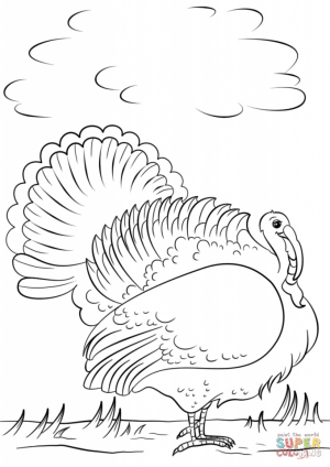 Wild Turkey Coloring Pages   76310